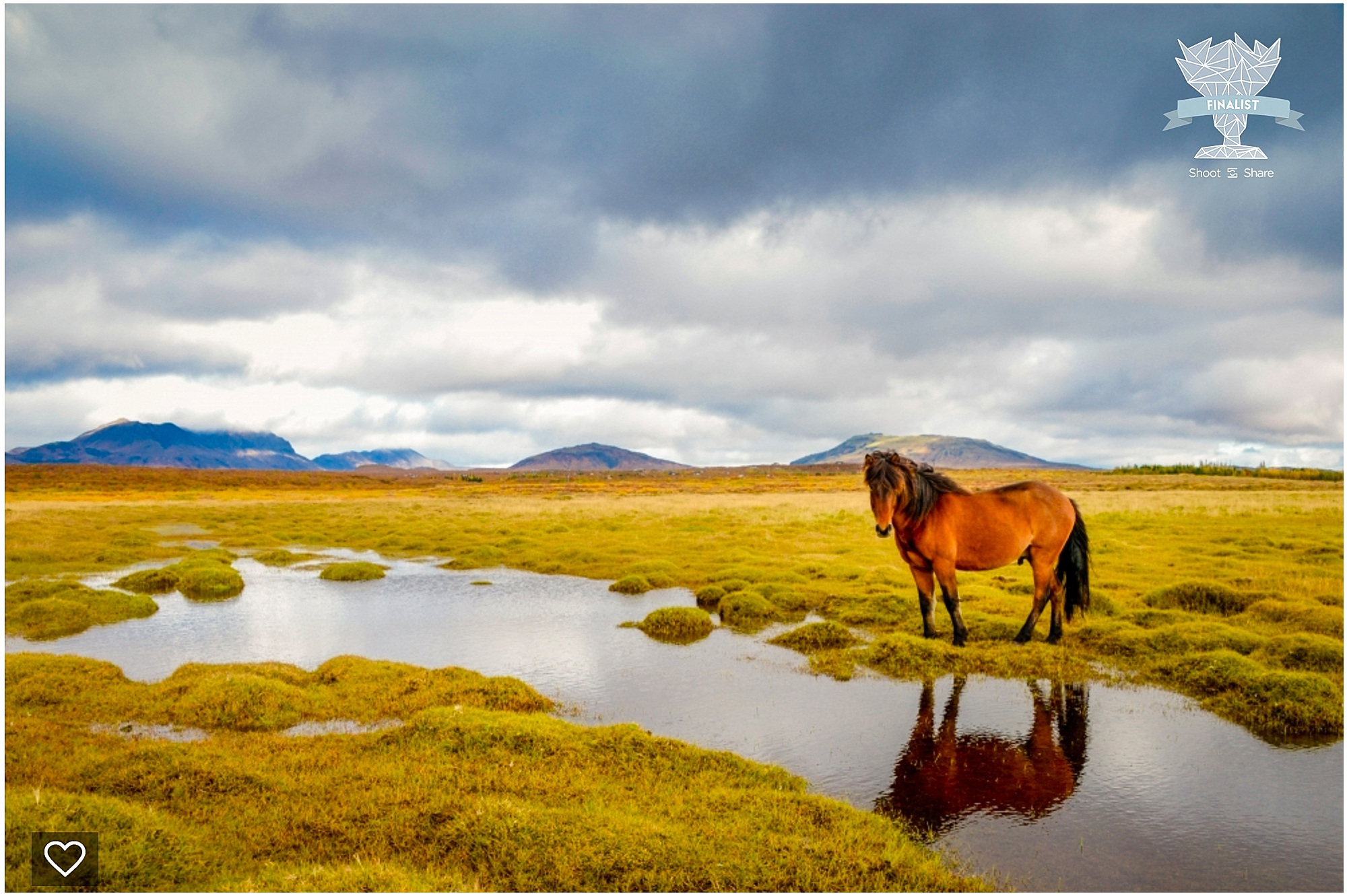 shoot and share, colorado travel photographer, lone horse, horse in landscape