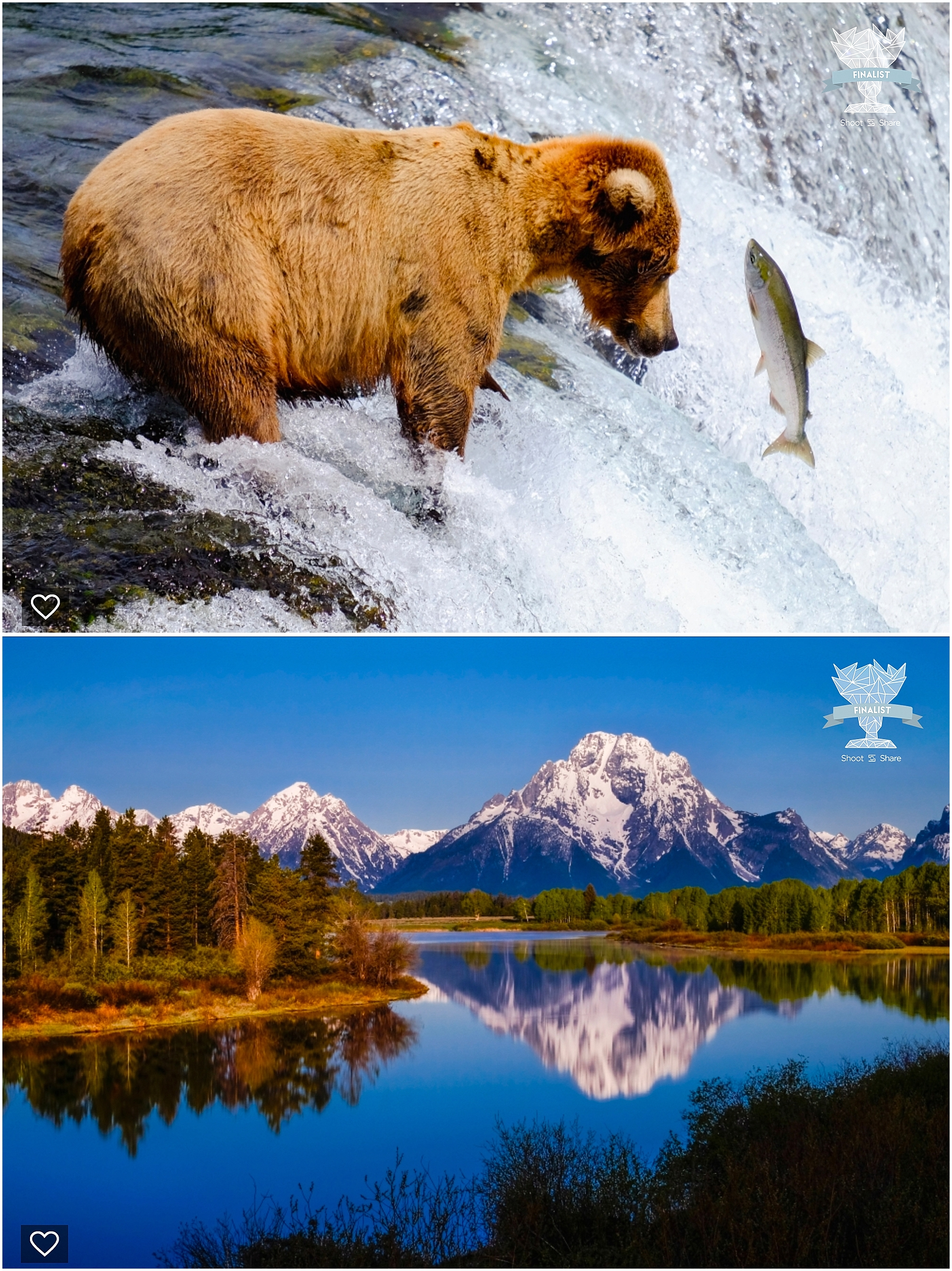 shoot and share, colorado travel photographer, alaska travel pictures, brown bear, brown bear catching fish, colorado mountains